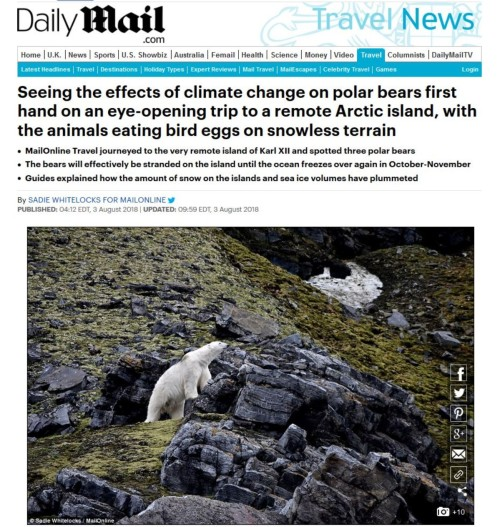 Daily Mail stranded bear headline_3 Aug 2018 all