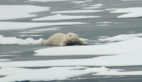 polar-bear-on-thin-ice_21-aug-2009_patrick-kelley-us-coast-guard.jpg