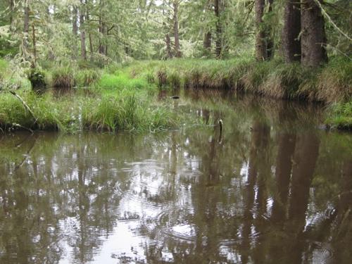 Beaver pond USFWS