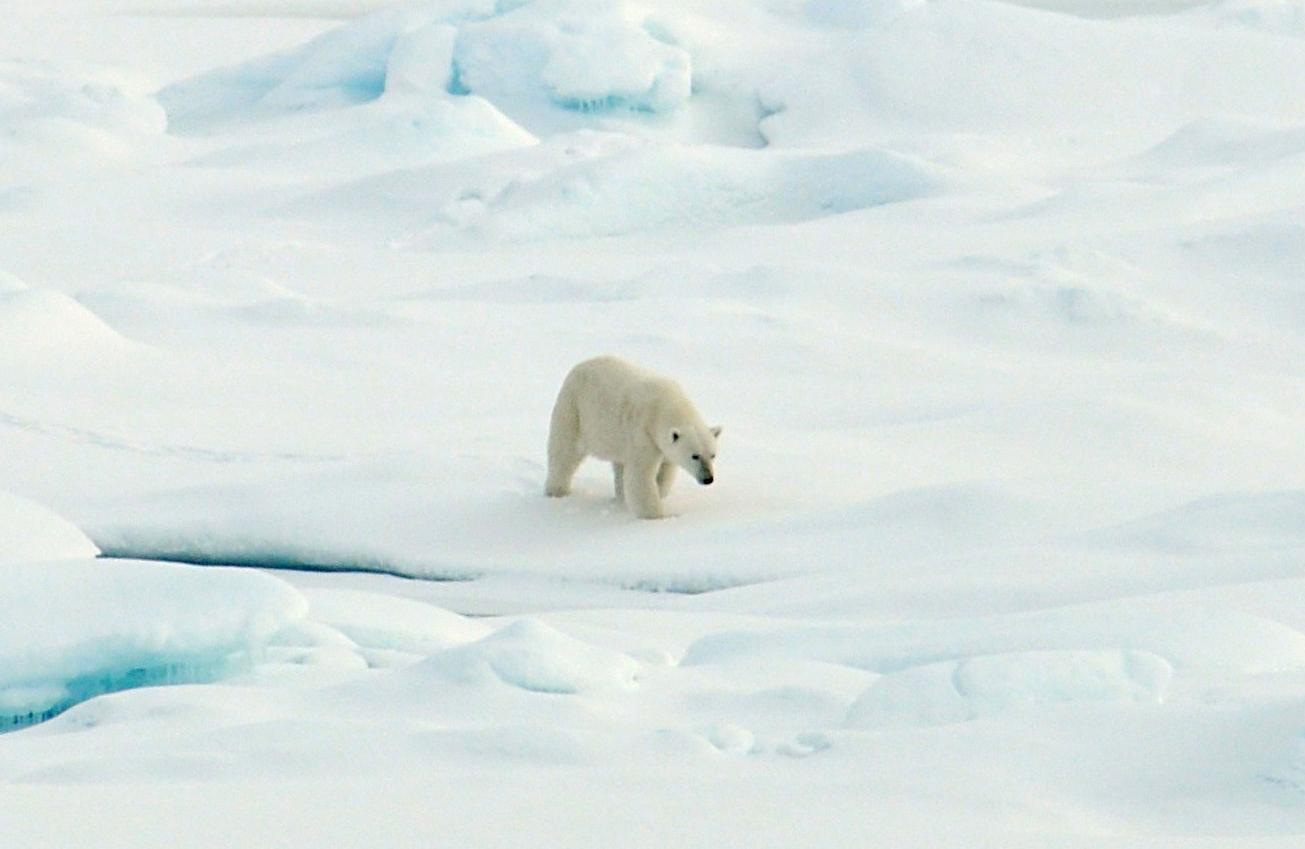 polar-bear-arctic-ice_21-aug-2009_patrick-kelley-us-coast-guard.jpg