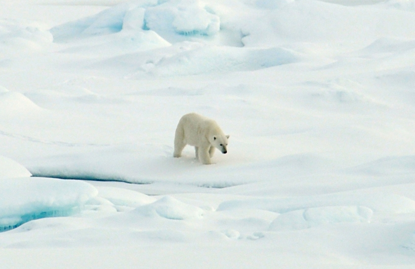 polar-bear-arctic-ice_21-aug-2009_patrick-kelley-us-coast-guard.jpg