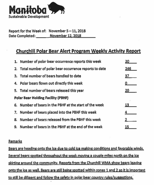 churchill-problem-bears_week-19_2018-nov-5-11.jpg