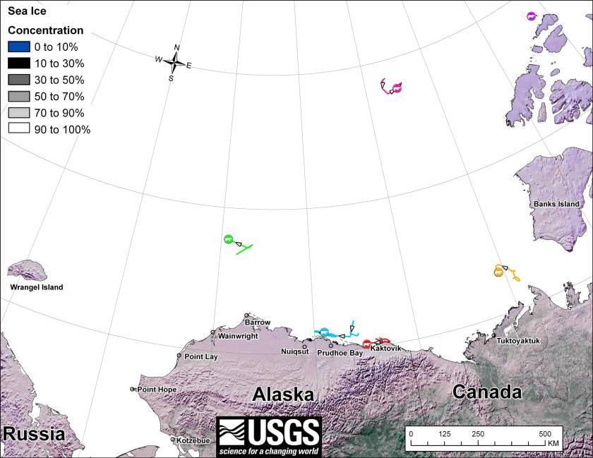 Beaufort tracking USGS bear-movements-December-2012
