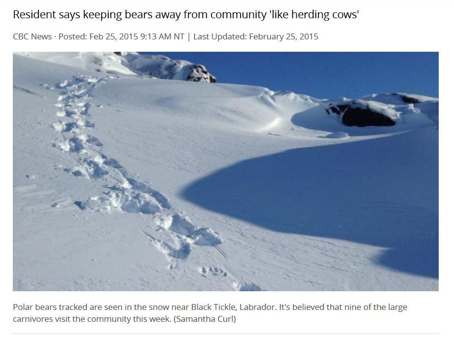Polar bear tracks_25 Feb Labrador 2015 CBC