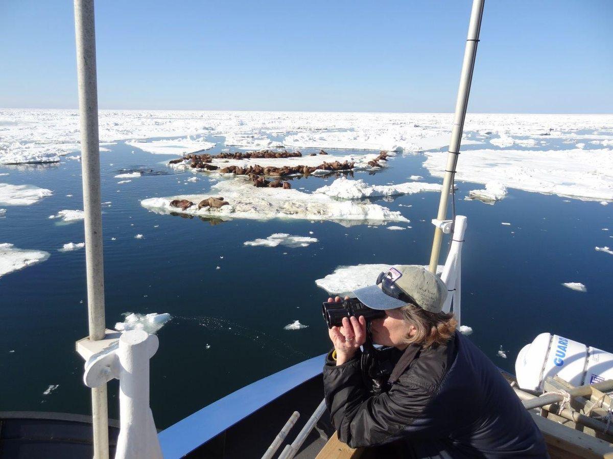 Quakenbush looking for ringed and bearded seals in Chukchi sea_11 Feb 2019 ADN