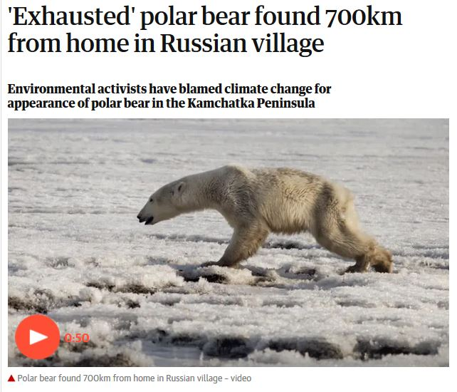 Exhausted polar bear Kamchatka_Guardian headline_18 April 2019