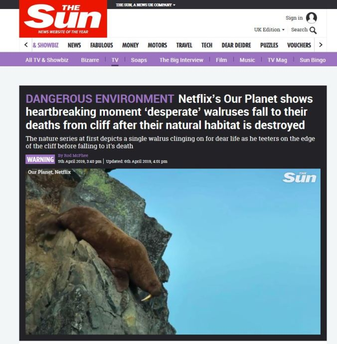 Walrus plunging cliff_The Sun headline 5 April 2019