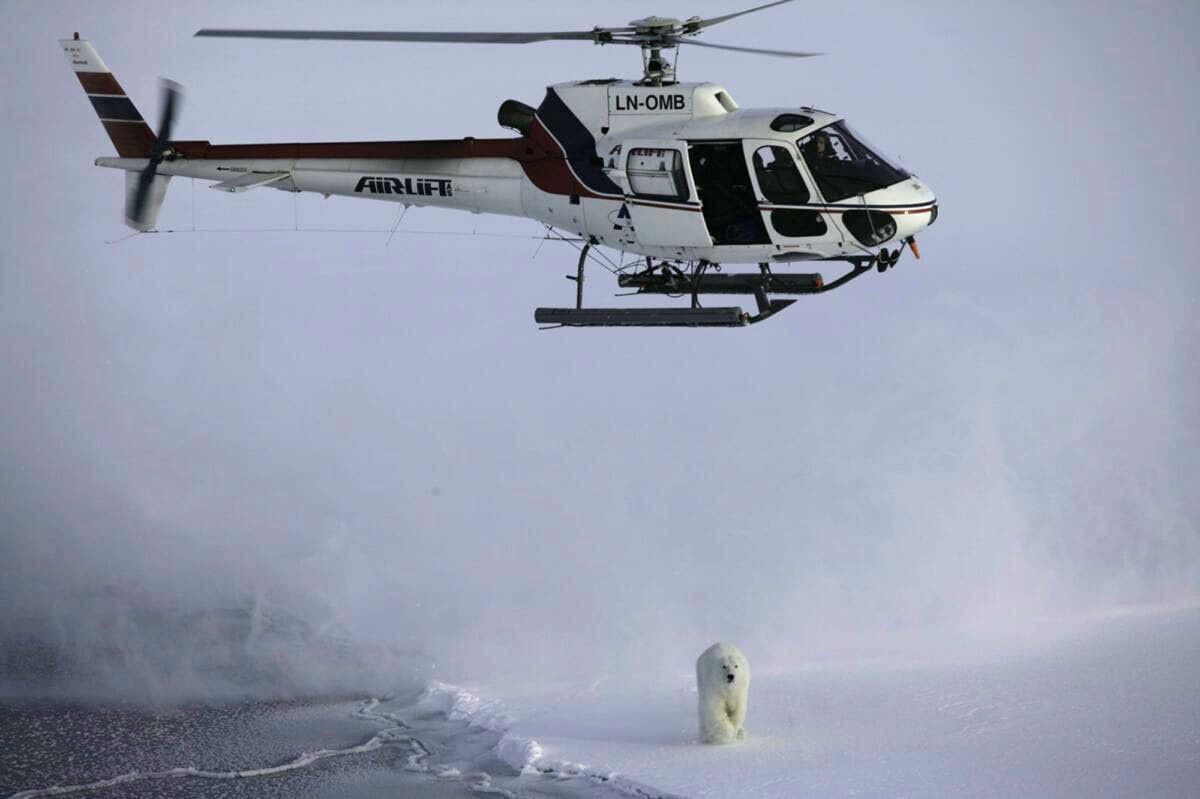 Svalbard polarbear-helicopter-npolar-framcentre