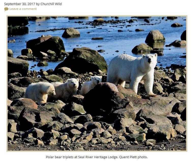 Churchill Seal River Lodge triplets_30 Sept 2017
