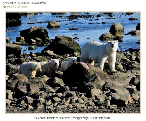 Churchill Seal River Lodge triplets_30 Sept 2017