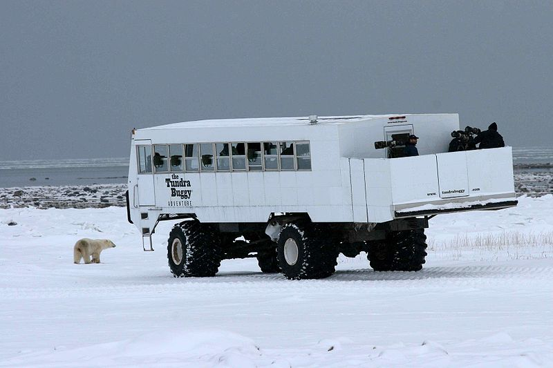 tundra buggy and bear_Frontiers North_wikipedia