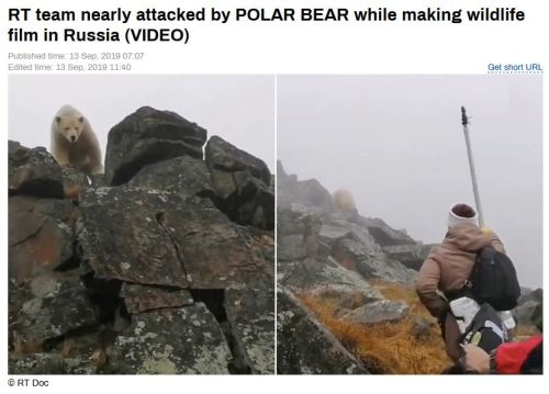 WWF and RT journalist fend off polar bear as they film walrus in Russia_13 Sept 2019 headline