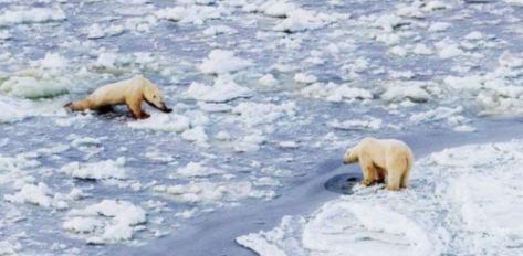 Mirror photo pbs on thin ice_13 Nov 2019 James Breeden photo