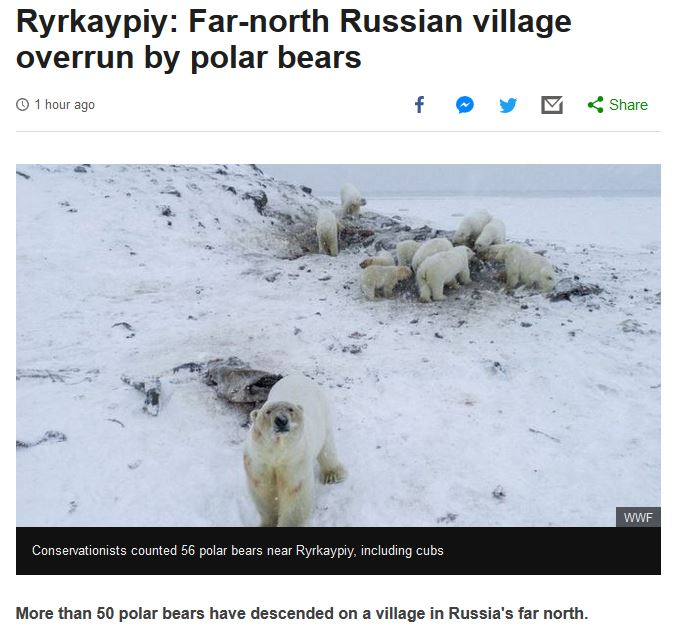 BBC Russian village Chukotka over run by polar bears BBC 5 Dec 2019 headline