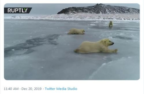 Russian PB cubs crawl over thin ice 20 Dec 2019 screencap