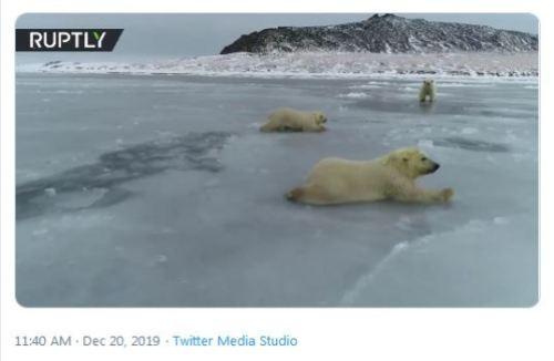 Russian PB cubs crawl over thin ice 20 Dec 2019 screencap