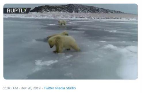 Russian PB cubs deliberately break thin ice 20 Dec 2019 screencap