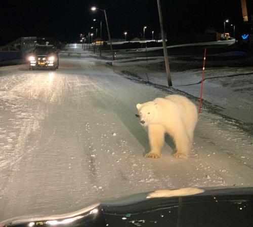 Svalbard pb visits Longyearbyen 28 Dec 2019 ICEPEOPLE