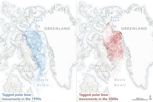 Laidre et al 2020 map polarbears_gps_2013