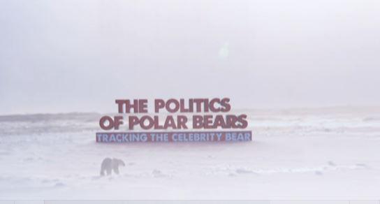 Politics of polar bears title