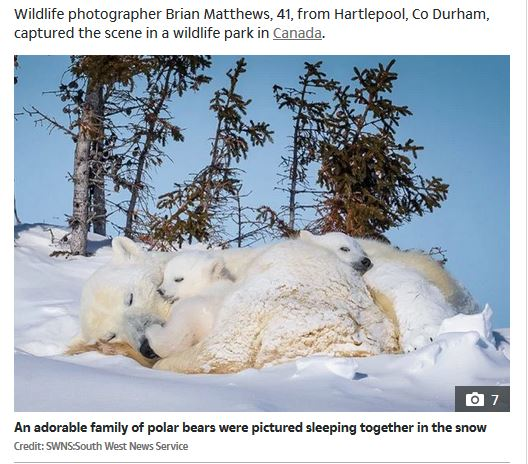 Sun pb emerging with cubs feature 22 March 2020 lead photo
