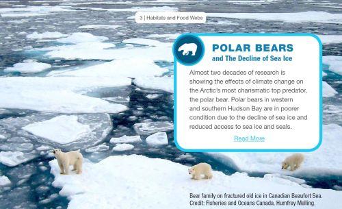 2019 DFO Arctic Report_Polar Bears from Summary document sent to media