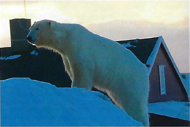 Bear island 8 March 2019_first bear seen since 2011_Bjørnøya Meteorological Station photo SVALBARDPOSTEN