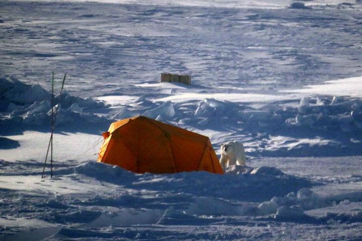 Polarstern 2020 polar bear 4th week April_photo1_Nr1_JuliaSchmale_web