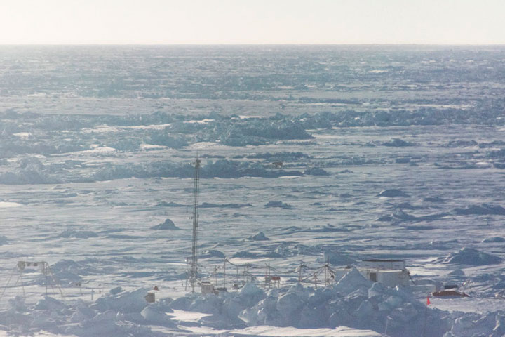 Polarstern 2020 polar bear_April_photo3_sfons_2020 04 23_Nr1_Steven Fons