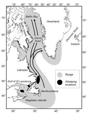 Harp seal range DFO_accessed 16 April 2015