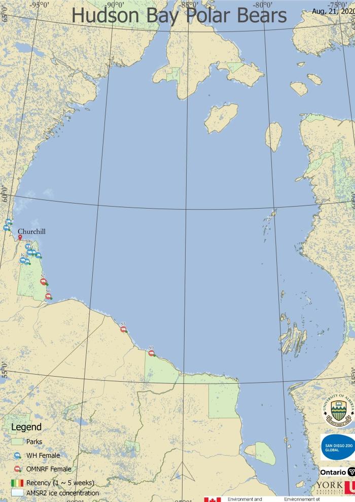 Derocher 2020 WHB tracking map 21 Aug_last bear ashore north of Churchill