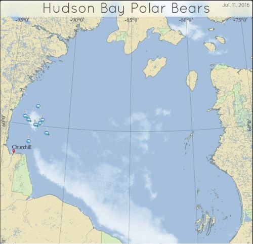 Derocher tweet_11 July 2016 WHB bear tracker